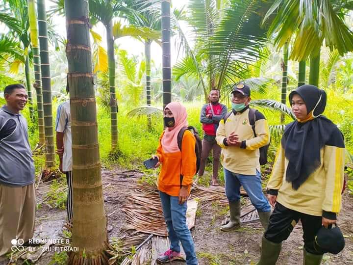 Disbun Inhil Tinjau Serangan Hama Brontispa di Desa Nusantara Jaya Kecamatan Keritang