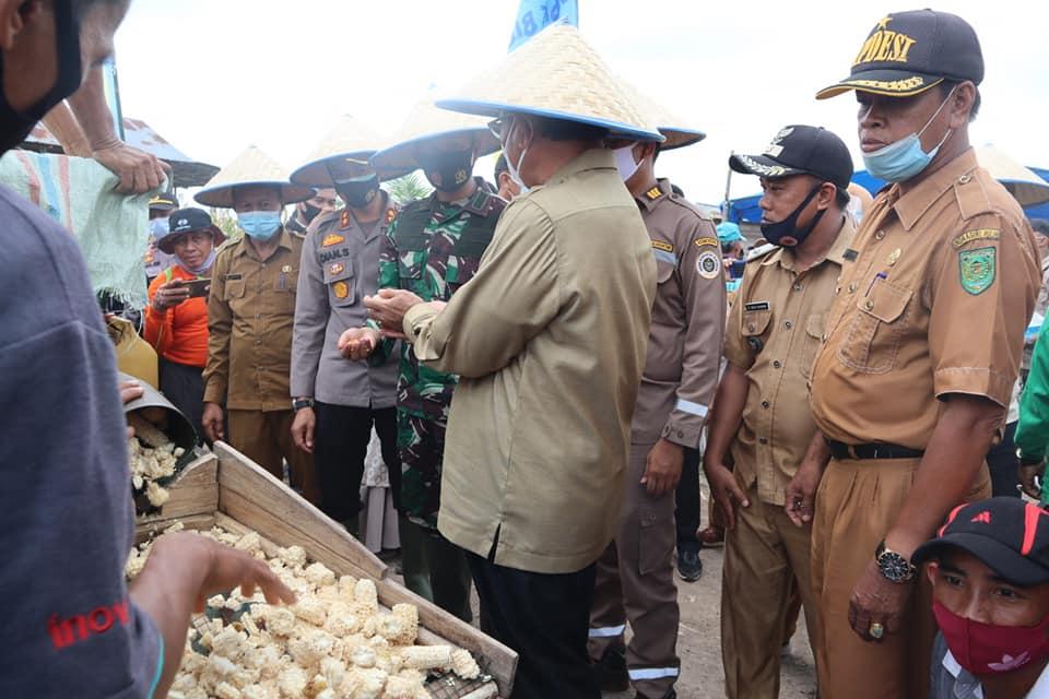 Peringatan Hari Pangan Se-dunia, Bupati Inhil HM.Wardan Lakukan Penen Raya Jagung di Desa Kuala Sebatu