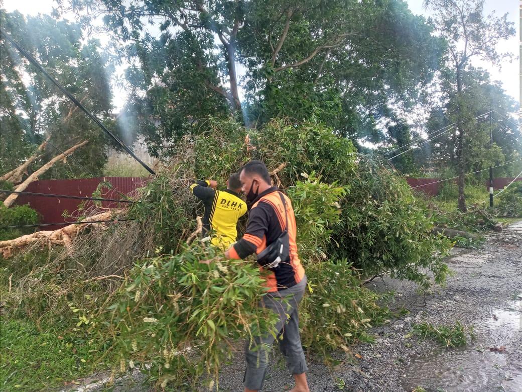 Bersihkan Rontokan Pohon Tumbang, Puluhan Petugas DLHK Inhil Dikerahkan